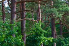Am Naturschutzgebiet Pferdebach