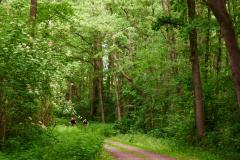 Naturschutzgebiet Pferdebach