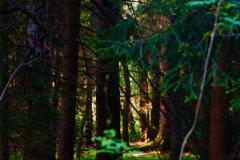 Ende Mai: Ein Morgen im Wald